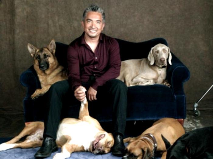 Cesar y sus perros